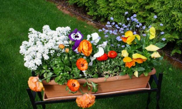Få din have ordnet med det samme